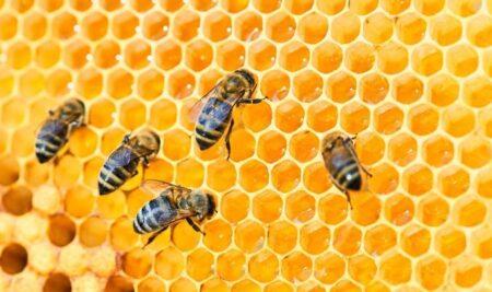 Green Future, il valore delle api